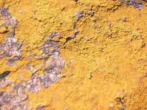 20081104091800-piedra-liquen.jpg