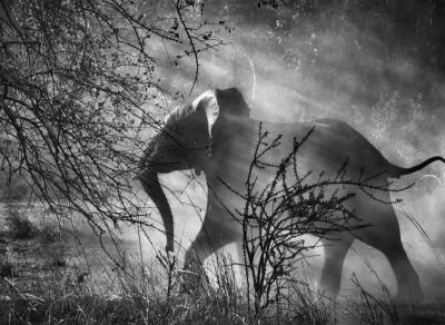 20140112153429-sebastiao-salgado-elefante.jpg